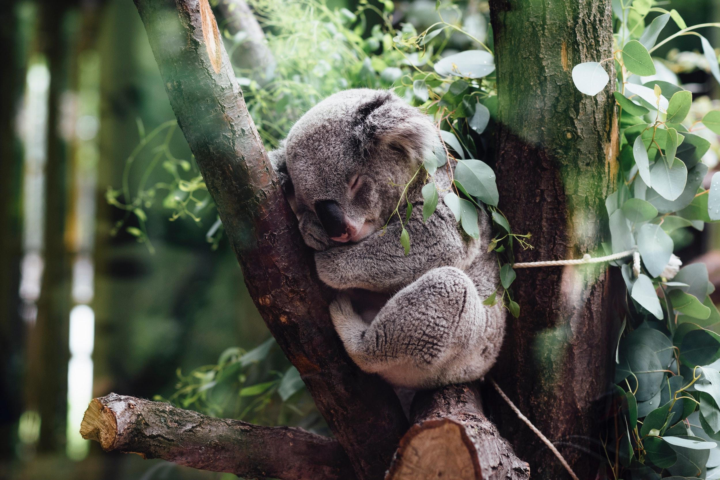 On Land Archives – On Wildlife